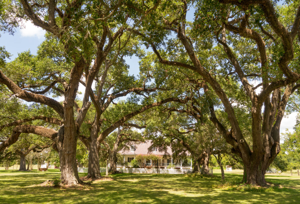Learn more about southern architecture!